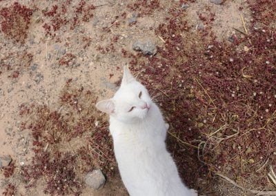 Animaux FV elRoque chat blanc